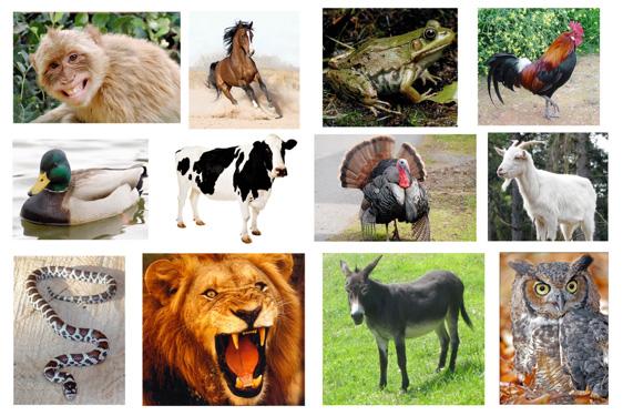 Dr. Doomlittle's Animal Gallery